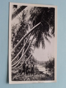 3 Young Boys On A River Under The PALMs ( No ID ) Anno 19?? Photocard ( Zie Foto's ) ! - Cartes Postales