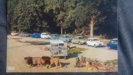 CPSM ZOO RESERVE AFRICAINE DE THOIRY LIONS EN LIBERTE AUTO VOTURE DS 4L 2CV - Lions