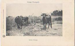 Congo       3         Buffle à L'écoute - Französisch-Kongo - Sonstige