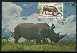 Cameroun - Carte Maximum 1965 - Animaux - Le Rhinocéros - Cameroun (1960-...)