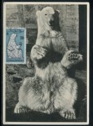 Tchécoslovaquie - Carte Maximum 1962 - Animaux - L' Ours Blanc - Tchécoslovaquie