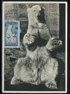 Tchécoslovaquie - Carte Maximum 1962 - Animaux - L' Ours Blanc - Czechoslovakia