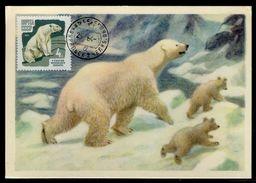 U.R.S.S. - Carte Maximum 1964 - Animaux - L' Ours Blanc - 1923-1991 UdSSR