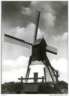 LONDERZEEL (Vlaams-Brabant) - Molen/moulin - Het Merelaantje, Overgebracht Uit Slijpe Bij Middelkerke In 1973. - Londerzeel