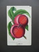 Cromolitografia Frutta Amsden Pesca D.M. Dewey Primo Novecento - Stampe & Incisioni