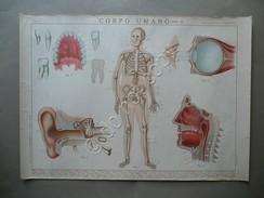 Cartoncino Didattico Corpo Umano Tav. II La Vita Nella Scuola Germani Anni '30 - Vecchi Documenti