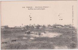 Asie: Viet Nam : Tonkin , Hanoï   Buffles  Aux  Paturages - Vietnam