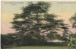 VILLIERS SUR MARNE - Le Cèdre De L'avenue De L'Isle - Belle Carte Gaufrée - Villiers Sur Marne