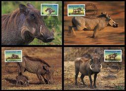 WWF Djibouti Dschibuti Eritrean Warthog Warzenschwein Phacochere 2000 CM MC MK Maxi Maximum Carte Card Maxicards - Maximumkarten