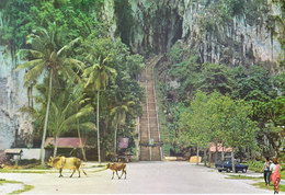 MALAYSIA - COLOUR PICTURE POST CARD - BATU CAVES, KUALA LUMPUR - TRAVEL / TOURISM - Malaysia