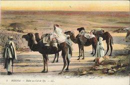 Kameel, Camel / Biskra - Halte Au Col De Sfa (unwritten) - Animaux & Faune