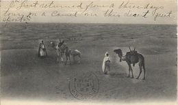 Kameel, Camel / Dunes De Sabre Du Sahara (written 1914) - Animaux & Faune