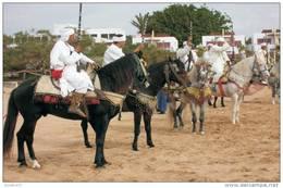 Horses Breeds - Bereber Postcard Collector - Caballos