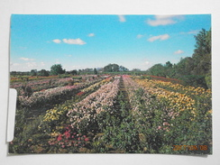 Postcard Renmark View From Tower Ruston's Rose Garden South Australia Nice Cancel And Stamp PU 1994 My Ref B21829 - Australia