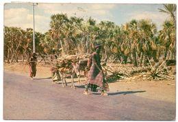DJIBOUTI - PALMERAIE D'AMBOULI / THEMATIC STAMP-OLYMPICS / BASKET - Gibuti