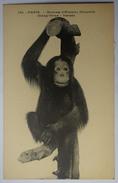 Paris - Museum D'Histoire Naturelle - Orang-outan - Bornéo - (n°8900) - Museums