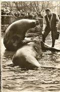 Zoologischer Garten Berlin-see Elefanten -futterung-soigneur-cpsm - Allemagne