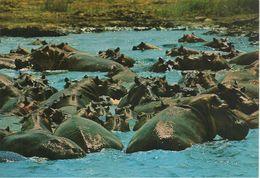 CPA-KENYA-1970-HYPPOPOTAME-GRANDS LACS-EST AFRIQUE- -TBE - Hippopotames