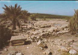 """ISRAEL---RARE---MEGIDDO--les étables--le """" Cité Des Chars """" De Méquiddo--voir  2 Scans - Israel"""