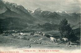 SWITZERLAND -  Aufstieg Zur Alp - En Routepour La Montagne - With Cows - Suisse