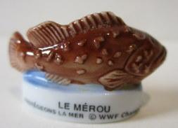 Fève Brillante  - Le Mérou - Protégeons La Mer - WWF - Animali