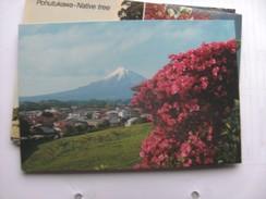 Nieuw Zeeland New Zealand Mount Egmont Nice Flowers - Nieuw-Zeeland