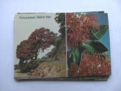 Nieuw Zeeland New Zealand Pohutukawa Native Tree - Nieuw-Zeeland