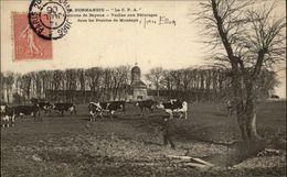 14 - Environs De BAYEUX - Prairies De Mondaye - Vaches - Bayeux