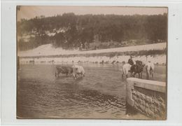 Photographie 01 Ain Suran Traversée Cavalier Cheval Vaches Photo 9 X 12 Cm Env - Photographs