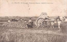 Marigny . Côte D'Or  . En Bourgogne . Récolte De La Betterave . Marigny Dans Le Fond . - France