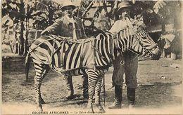 Themes Div -ref U226- Zebres - Colonies Africaines - Le Zebre Domestique  - Carte Bon Etat  - - Zèbres