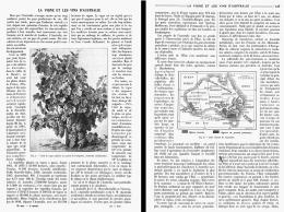 LES VIGNES Et Les VINS D'AUSTRALIE    1908 - Wine