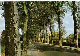 MAROLLES-en-HUREPOIX: L'Avenue - France