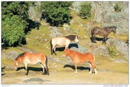 Horses Breeds - Gotland Postcard Collector - Paarden