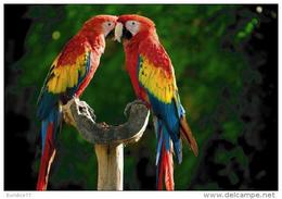 Endangered Species Collection - Postcard Exotics Birds - Animales