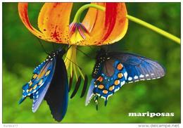 MARIPOSAS POSTAL 1 - Mariposas