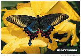 MARIPOSAS POSTAL 4 - Mariposas