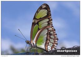 MARIPOSAS POSTAL 5 - Mariposas