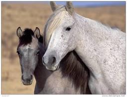 Horses Postcard (15x10 Cm. Aprox.) - Caballos