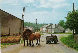 Laiche CPSM - Village Et Chevaux Ardennais - Chassepierre