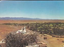 MAROC--SUD MAROCAIN--vue Générale Prise De La Kasbab De Tifoultoot--voir  2 Scans - Maroc