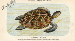 TORTUES(CHROMO) CHOCOLAT LOUIT - Turtles