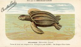 TORTUES(CHROMO) CHOCOLAT LOUIT - Schildpadden