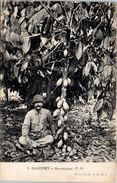 AFRIQUE --  DAHOMEY -- Un Cocaoyer - Dahomey