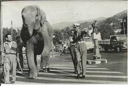JUMBO AU DEPART DE TURIN VA FRANCHIR LA ROUTE DES ALPES - EQUIPE CONDUITE PAR  JOHN HOYTE - PHOTO PRESSE 19.07.59 - Berühmtheiten