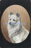 78063 ART ARTE PROFILE DOG BEAUTY POSTAL POSTCARD - Illustrators & Photographers