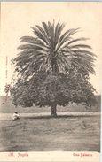 AFRIQUE -- ANGOLA -- N° 135 - Angola