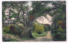 UK2742      MARLBOROUGH : Big Bellied Oak, Salisbury Road - Salisbury