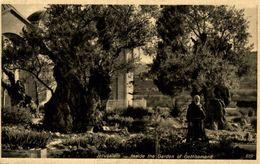 Jerusalem Inside The Garden Of Gethsemane - Israel