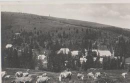 Feldberg Schwarzwald - Hotel Kurhaus - Ca. 1955 - Feldberg